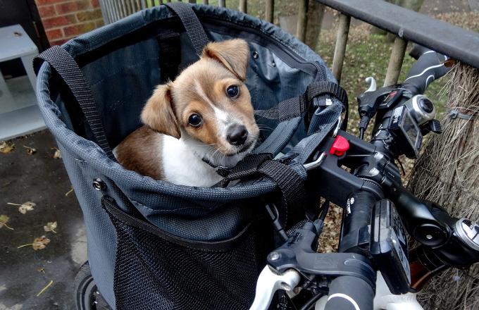 Panier chien velo occasion